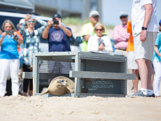 Marmalade the Seal is Released at 40th Street, Ocean City, MD | June 7, 2018