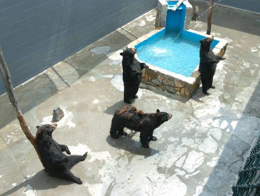 635785090014391502-zoo