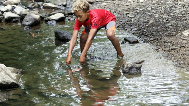 Cayden George, 7, uses two nets to try and trap crawfish as he was catching them and counting how many he caught before he released them Monday in the Town Creek in Brookside Park.