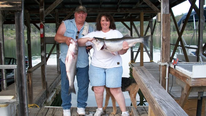 Two local fishermen show off the results of a recent trip on Norfork Lake. This is the best time of the year to catch stripers on the lake.