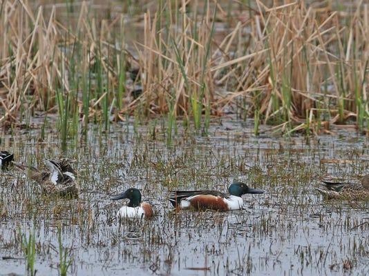 Wetlands 13