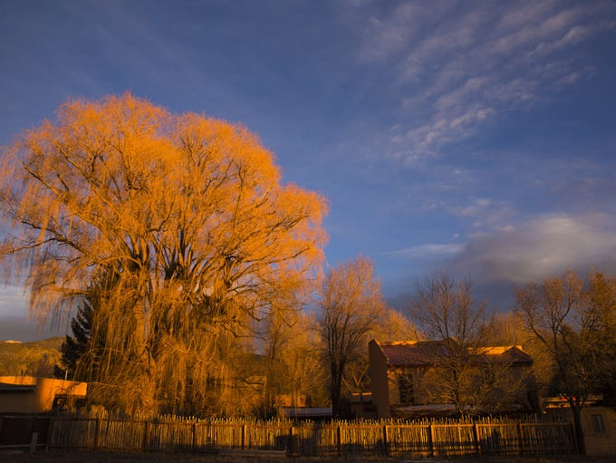 Sunset light on trees in Taos, New Mexico February