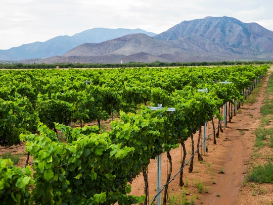 Grenache vines are backdropped by the Dragoon Mountains