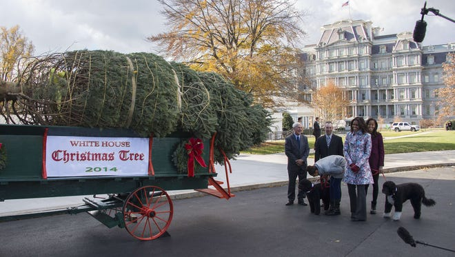 The White House Christmas Tree arrives.