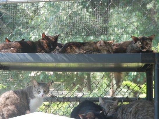 Cat Lady (2).JPG