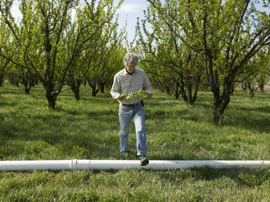 Steve Ela's orchard is dependent on snowmelt from nearby