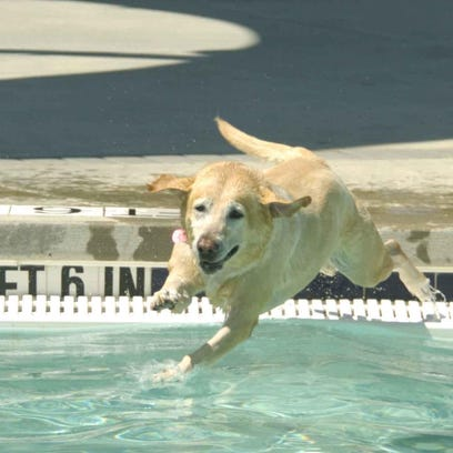 Dogs enjoy Waggin' at the Waterpark during a past event.