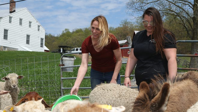 From left, Stacey Higgins and her daughter, Samantha Coon feed the sheep and their donkey at Old Adriance Farm in Staatsburg on May 7, 2018. Samantha and Stacey have been working together in their food truck, and are in the process of starting a farm brewery and wedding venue.