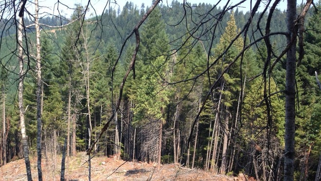 "A watchdog group is challenging the ""green lumber"" certification for Plum Creek Timberlands."
