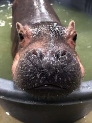 Fiona, in her baby pool Feb. 25, 2017, is a ham for