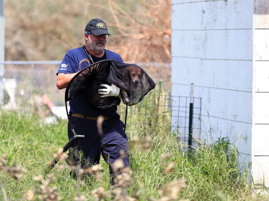 Dave Pauli, with the Humane Society of the United States Animal Rescue Team, rescues a dog in Fulton on Sunday, Sept. 3.