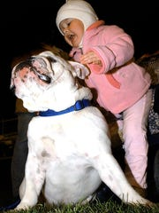 Alyssa Zorbaugh of West York, bundled up at 17 months old, tries to be friends with Rock, an English Bulldog belonging to Dan Senft at a West York football game in 2003. West York's nickname is the Bulldogs.