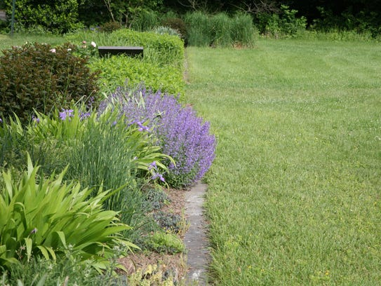 Catmint and other perennials blooming at Rutgers Gardens