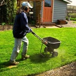 This Nov. 2, 2012 photo shows a man aerating a lawn which removes plugs of soil and thatch, near Langley, Washington. This lawn care maintenance improves water, air and nutrient penetration and promotes the growth of healthy organisms in the soil.