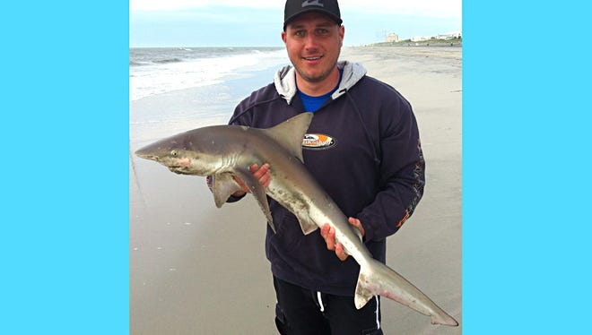 Matt Wilson with his first brown shark of the season measuring 37 inches. He landed the shark last week from the Brigantine surf using a white perch head for bait.