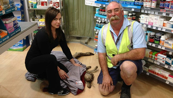 In this photo provided by Wildlife Victoria, volunteer rescuers Ella Rountree, left, and Geoffrey Fuller pose for a photo with a kangaroo they captured at Melbourne airport, Australia, on Oct. 16, 2013.