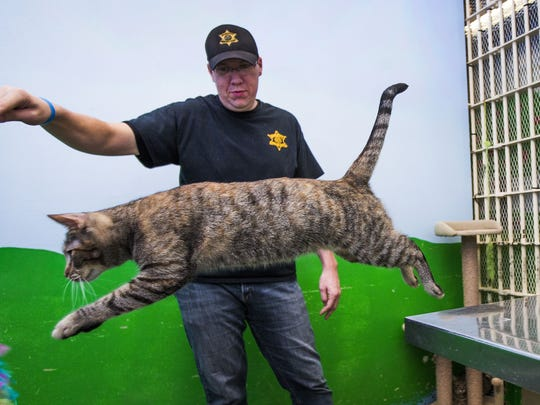 Maricopa County Sheriff's Department Detention Officer Keeney works with the dogs and cats in the Maricopa Animal Safe Haven (MASH) Unit. Abused and neglected animals that have been confiscated are housed in the unit and many inmates in the jail volunteer to care for them.