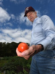 Ed Russell harvests a celebrity tomato on Aug. 18 at