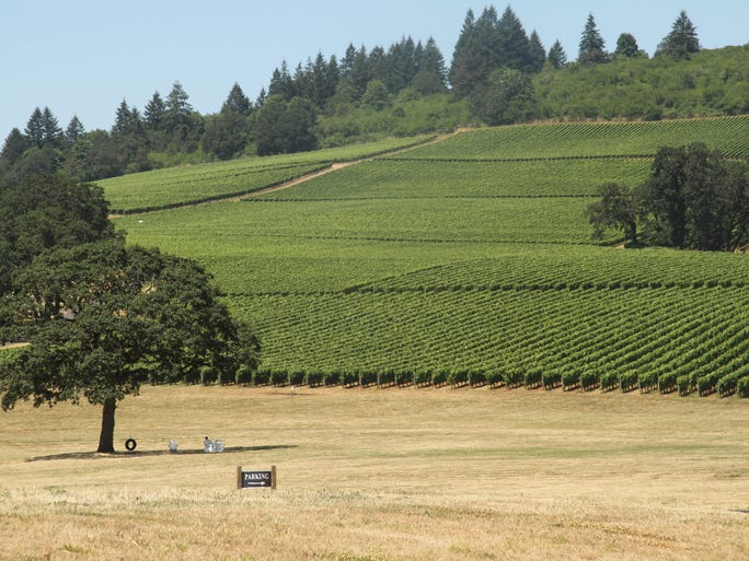 A towering oak in the middle of the field beckons to visitors with a tire swing and Adirondack chairs from which to admire the beautiful view of Stoller Vineyards.