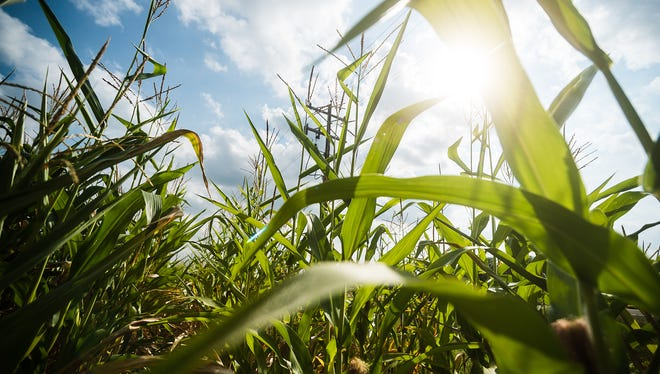 Most Minnesota crops in good shape.