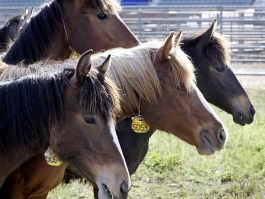 BLM Holds Wild Horse Adoption