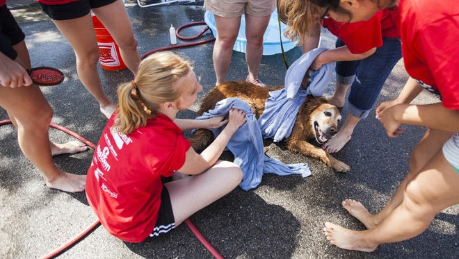 """Jennifer Johnson's dog Lucy shakes off some excess water at Gilda's Club Grand Rapids' 14th annual """"World's Largest Dog Wash"""" at Fifth Third Ballpark on Sunday, July 10, 2016."""