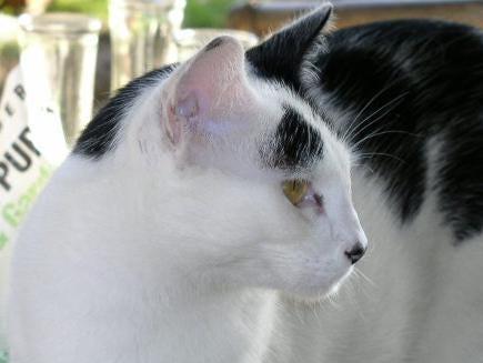 "Cat//Muse Nose 2/"" Fancy Dress Black Sponge Nose One Size Fits All Slip On New"