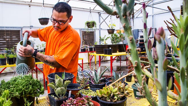 Inmate Jose Lopez, 31, a horticulture teacher's aide, waters the plants in the greenhouse at the Red Rock Correctional Center in Eloy on Friday, July 15, 2016. Inmates are eligible to earn master-gardener certificates and learn skills that can be used once they are released from custody.