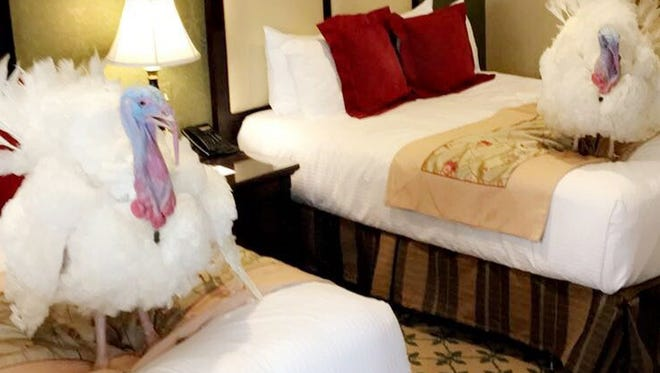 In this photo released by The White House, Monday, Nov. 20, 2017, two turkeys set to be pardoned by President Donald Trump are shown in a Washington hotel, Sunday Nov. 19, 2017.  President Trump will pardon them on Tuesday.