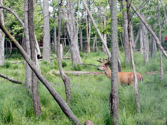 The Wisconsin Department of Natural Resources is implementing changes involving the use of deer and turkey carcass tags.