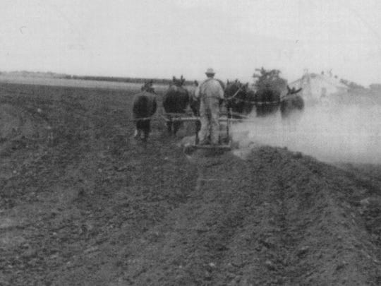 William Elmer Bruton plowed his fields in Schleicher County with mules in the early 1900s.