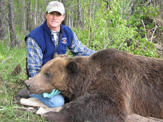 This May 24, 2007 photo made available by Mike Madel shows Madel with the second-largest grizzly bear ever recorded after it was captured in the 10,000-square-mile Northern Continental Divide Ecosystem, in the Teton River drainage on the Rocky Mountain Front, near Choteau, in Montana.
