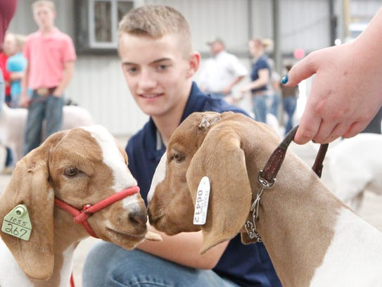 Ian Cobb, 14, watches as his goat Torche nuzzles Farquaad,