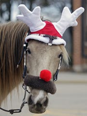 A horse is dressed as Rudolf the Red-Nosed Reindeer.
