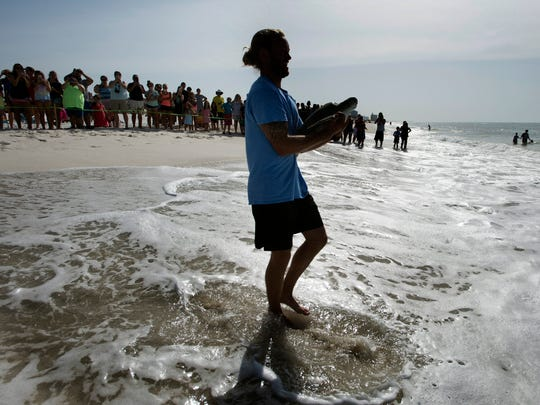 Gulfairum employee, John Nolan, carries a Green sea turtle to the shoreline at Park West on Pensacola Beach to be released back into the wild on Tuesday, June 19, 2018.