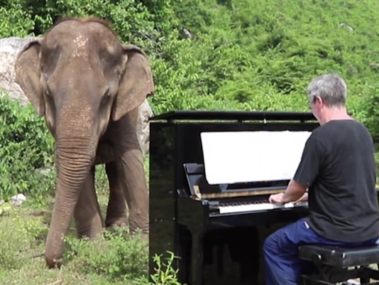 VIDEO THUMBNAIL - Piano for blind elephant