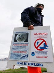 "Ralph Heitt picks up a ""Seal Sitters"" sign after the harbor seal pup he and other volunteers had been watching during his rest period returned to the water in Seattle."