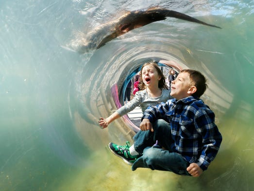 Creedyn Nelson, 6, and Becca Knight, 5, react as a North American river otter swims overhead at Otter Creek as Columbian Park Zoo opens its doors for the 2014 season Saturday, April 19, 2014, in Columbian Park.