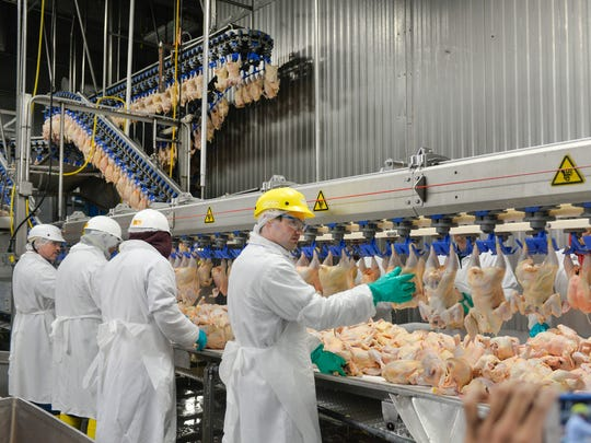 Thirty corporate positions were eliminated at St. Cloud-based GNP Co. as the production company transitions into new ownership under Greeley, Colorado-based Pilgrim's Pride Corp. GNP production facilities and family farms are not expected to be impacted by the $350 million acquisition finalized Jan. 6. In this April 2016 photo, employees handle whole chickens at the GNP plant in Cold Spring.