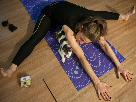yoga with cats