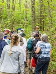 Park rangers will lead free wildflower hikes this spring at Grandfather Mountain State Park.