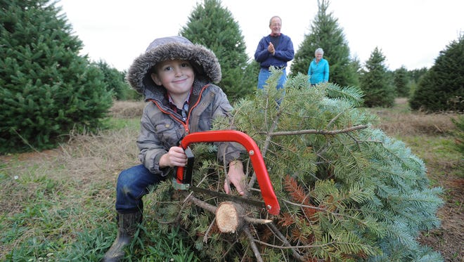 Will Skidmore, 6, of Odessa, with a freshly cut Christmas tree at Coleman Christmas Tree Farm in Odessa.