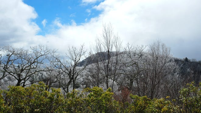 A deep cold moving from the west created perfect spring rime ice conditions on Mount Pisgah in late March, which led to closure of the Blue Ridge Parkway.