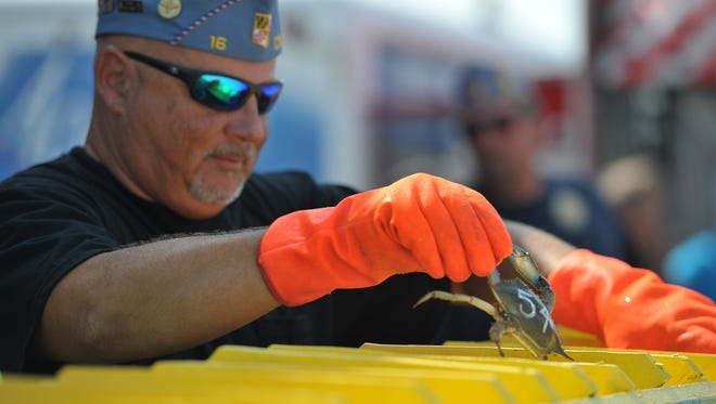 Crab races are the highlight of the National Hard Crab Derby Race in Crisfield.