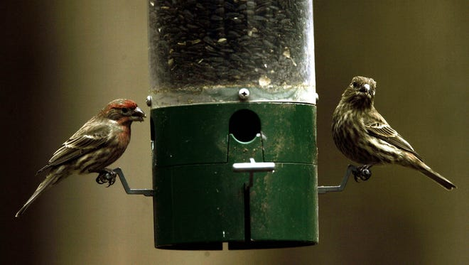 Disinfect your feeders once or twice a month during the feeding season.