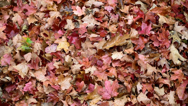 Fallen leaves are scattered around Chambersburg Memorial Park, as seen Thursday, Oct. 27, 2016