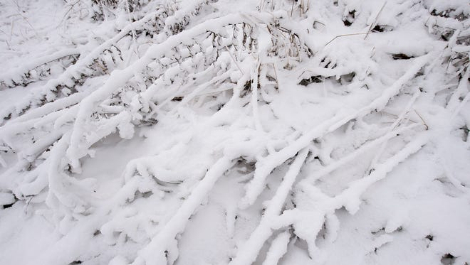 Snow stuck to branches from snowmaking at Roundtop Mountain Resort Sunday December 11, 2016.