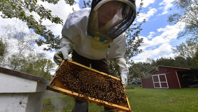 Beekeeper Gretch Schmelzer checks on the queen bee on frames enclosed in a hive box in her Sturgeon Bay back yard.