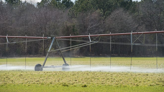 View of a field adjacent to Mountaire Farms in Millsboro where they spray their waste water.