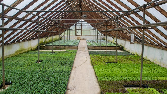Miller Plant Farms has about 29 greenhouses filled with seedlings.